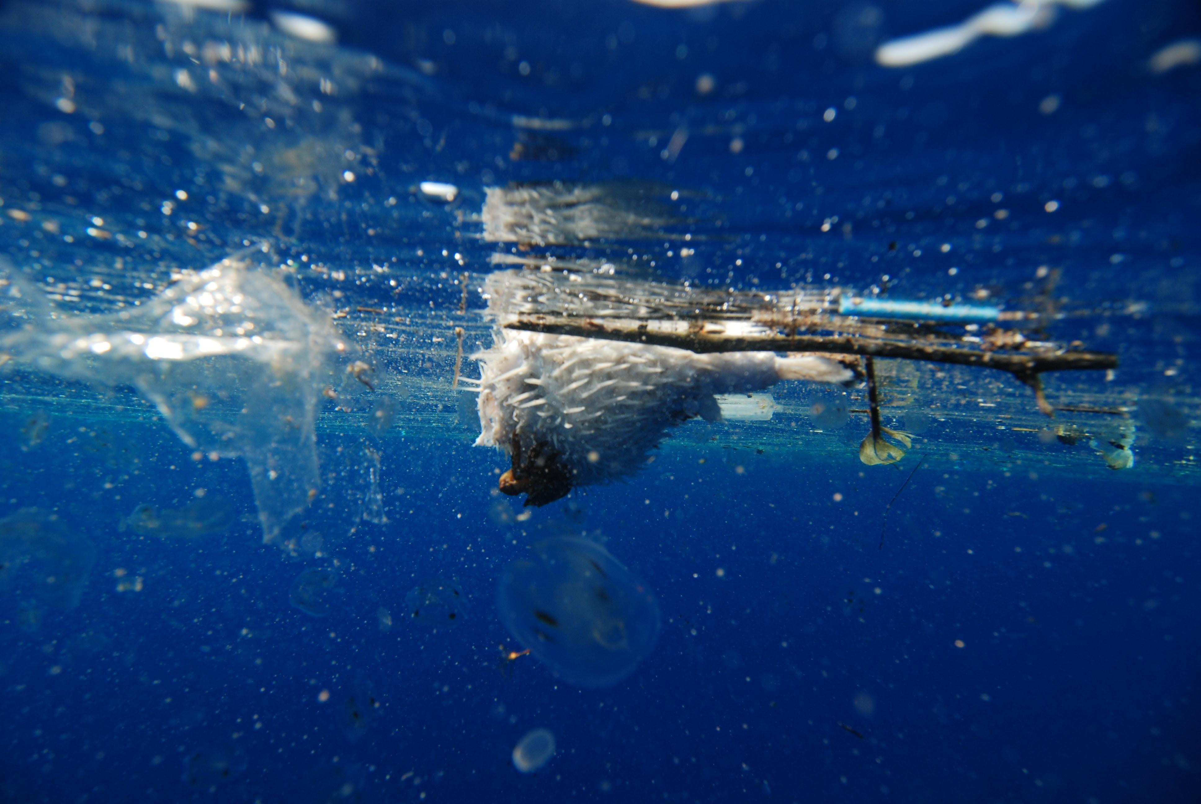 "Ciné-débat ""A PLASTIC OCEAN/OCEAN PLASTIQUE"""