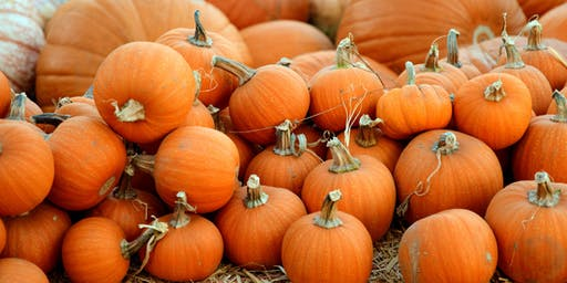 Pumpkin Carving & Decorating Contest at Stanley Beer Hall