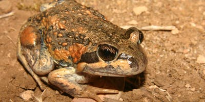 Listen and Learn about Frogs at Oaklands Wetland
