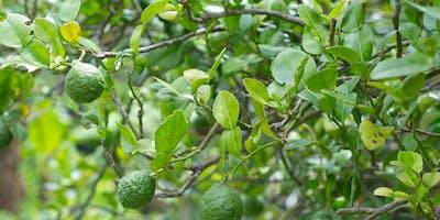 Fruit Trees for Backyards - Session 1