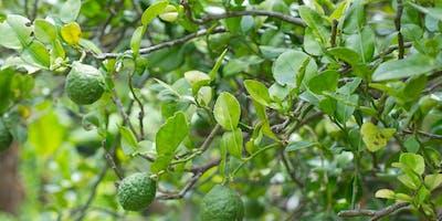 Fruit Trees for Backyards - Session 2