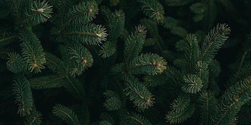 Hive Dine | Noël