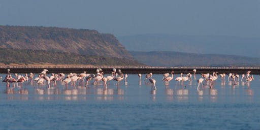 LAKE MAGADI DAY TRIP