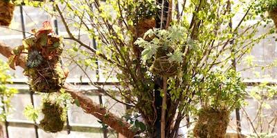 Spring Kokedama