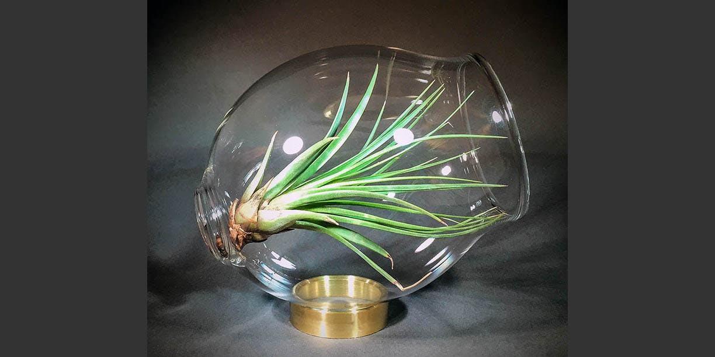 Glass Terrariums