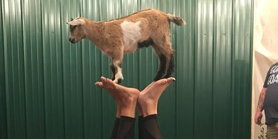 Indoor Goat Yoga by Shenanigoats with Amber