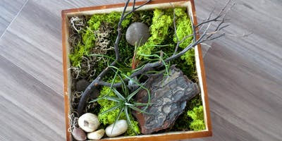 Workshop: Vertical Air Plant Gardens