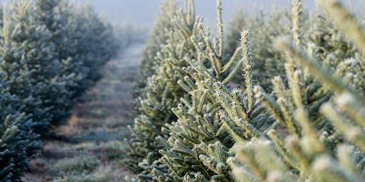 Christmas Tree Farm Mini-Sessions - Redlands