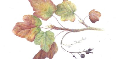 Winter Colors: Branches, Leaves, and Winter Fruit -- Colored Pencil Workshop with Nina Antze
