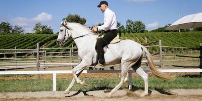 Stage M.E.I. Sesto Modulo - Addestramento e Cavallo da Rimonta