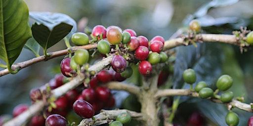 Coffee Origins - Counter Culture NYC