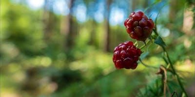Shinrin-yoku Forest Walk (Zeist)