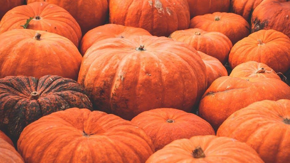 Pumpkin patches aplenty near hutchinson.