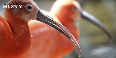 Sony Mirrorless Tips and Tricks - SA