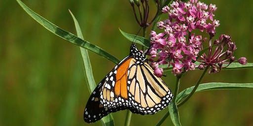 Milkweed and Monarch Magic