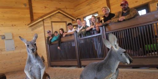 Kangaroo Experience with granola feeding