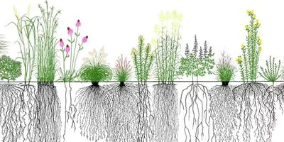 Plants for Beginners: Roots and Underground Parts