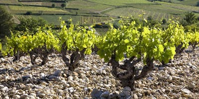 Reds of the Southern Rhone