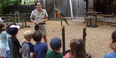 Summer Wild Adventure Program:Armadillos to Zebras Grades K-2 Session 2