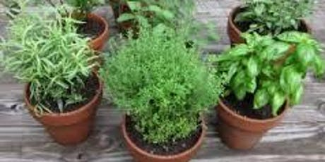 Growing Herbs in the Home Vegetable Garden - Jessie Brock Community Center tickets