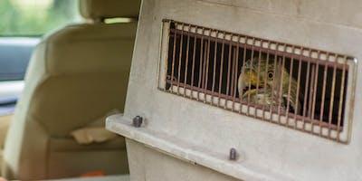 Injured Bird Transport Workshop