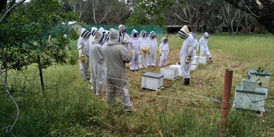 Introduction to Bees and Beekeeping Course