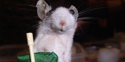 Anthropomorphic Mouse Taxidermy