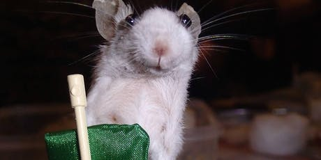 Anthropomorphic Mouse Taxidermy tickets