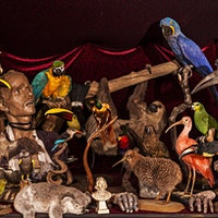 The British Academy of Taxidermy