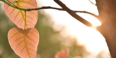 ""\""""Awakening The Heart"""" Mindful Nature Connection Weekend Workshop""400|200|?|en|2|5fb1e39dadd745113db85f480de18790|False|UNLIKELY|0.28923675417900085