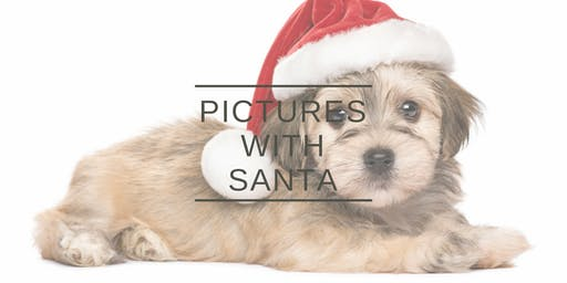 Pictures With Santa Benefiting Buckeye Basset Hound Rescue (Westerville)