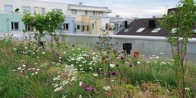 Viherkattotyöpaja - Kaupunkivihreää katoille