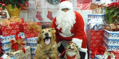 FREE Pet Photo with SANTA at VCA Hollywood Animal Hospital