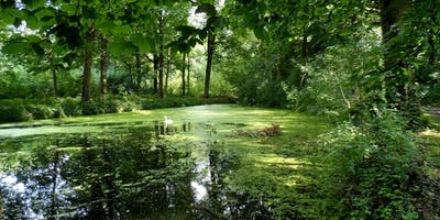 Forest Bathing (Shinrin-yoku) Walk (Vijverbos)