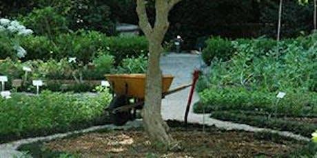 Propagating Herbs for the Home Vegetable Garden- Classroom in the Garden tickets