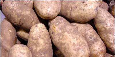 Potatoes for the Home Vegetable Garden- Classroom in the Garden
