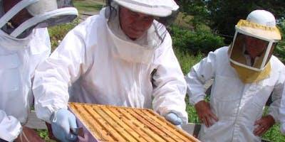 Beginning Beekeeping Rochester NY 2020