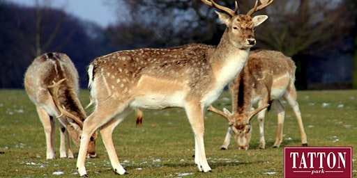 Deer Feed and Trailer Ride at Tatton Park