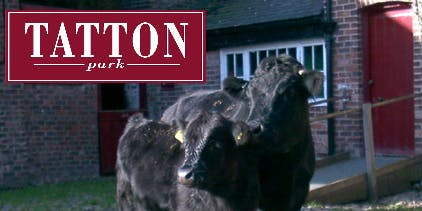 Bovine for Beginners at Tatton Park