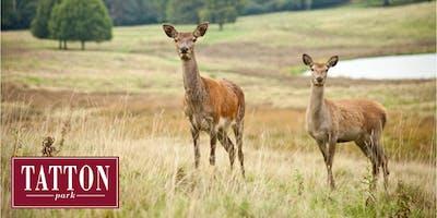 Summer Deer Walk at Tatton Park