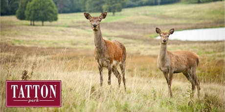 Summer Deer Walk at Tatton Park tickets