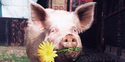 Pigs Galore at Tatton Park