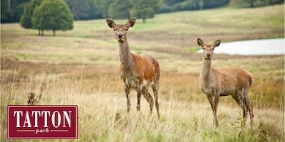 Autumn Deer Walk at Tatton Park