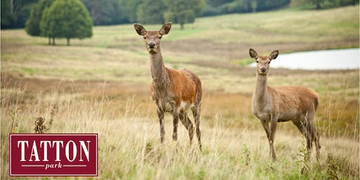 Autumn Deer Walk at Tatton Park