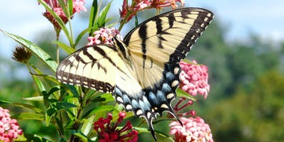 Attracting Butterflies and More to your Florida-Friendly Landscape