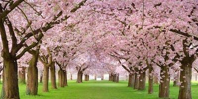 Cherry Blossom Washington DC Bus Tour