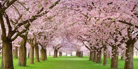 CHERRY BLOSSOM TOUR WITH LUNCH WASHINGTON DC APRIL 2020 tickets