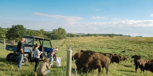 Bare Bison Farm Tour