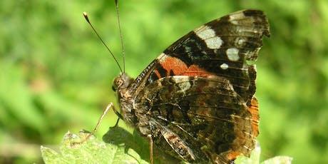 Butterfly Walk along the River Crane tickets
