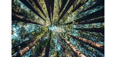 Retiro Urbano do Moved by Mindfulness
